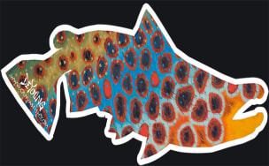 Brown Trout Flank - Blue Cutout Decal