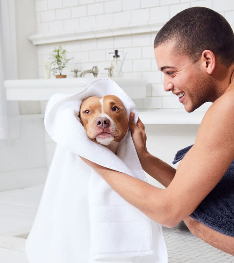 Smiling man drying dog with white towel