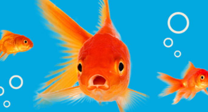 Pet Fish Products & Supplies