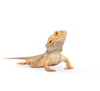 Small pet image