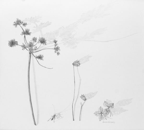 line drawing of plants