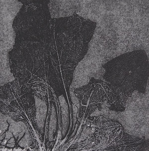 black and white print of leaves