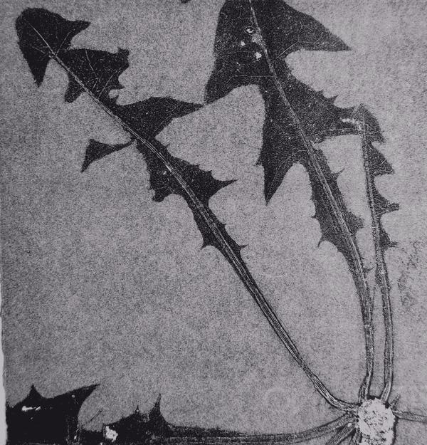 print of dandelion leaves