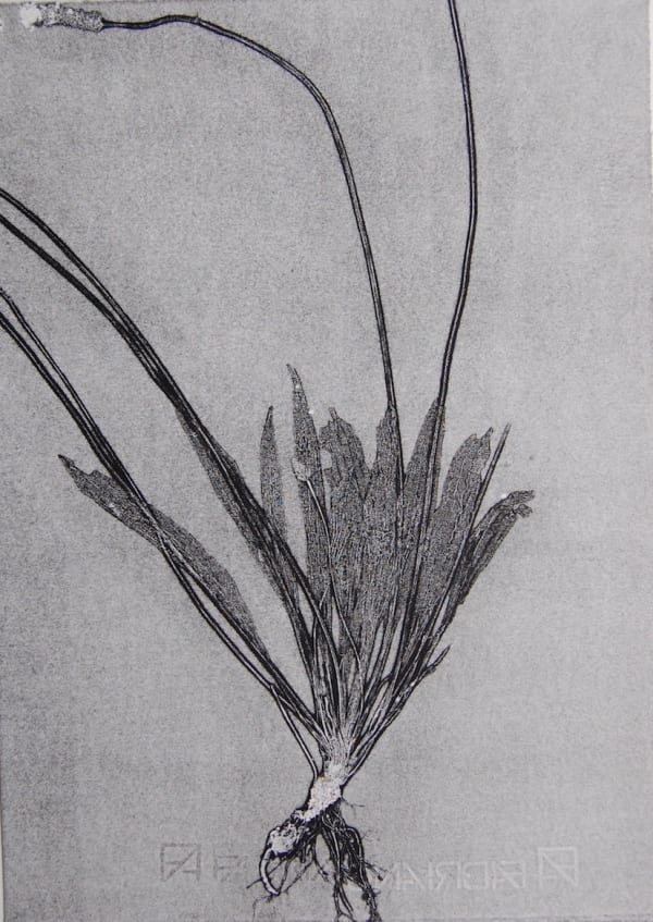 black and white print of plant