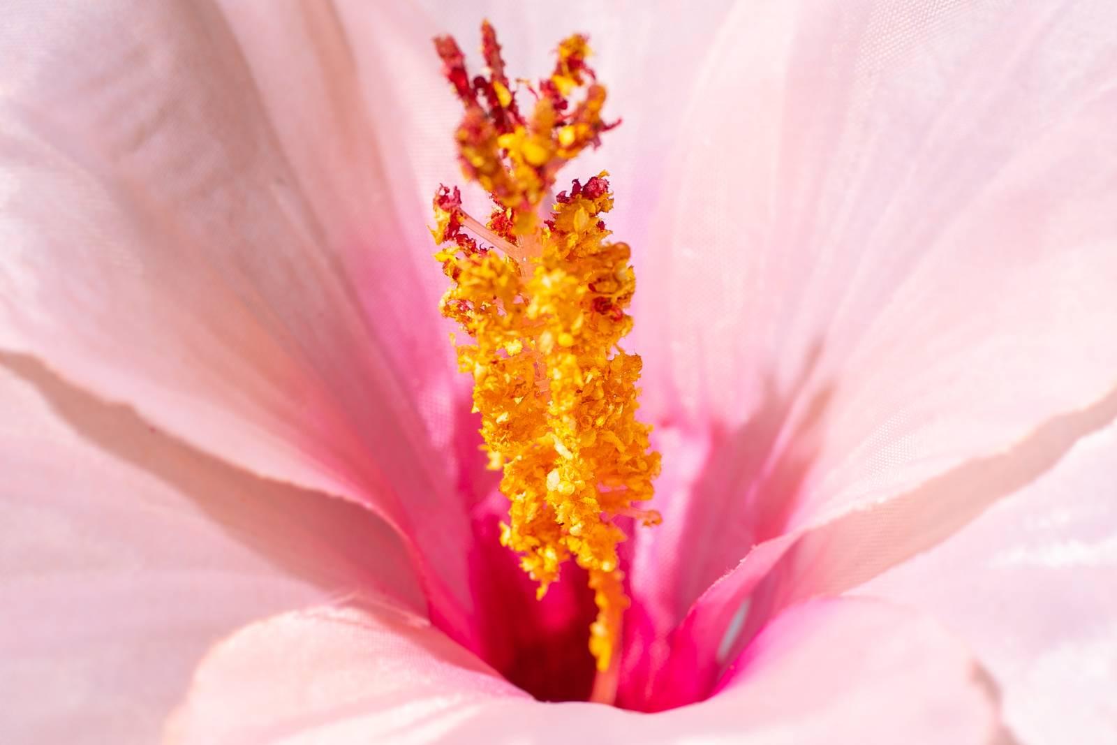 Ingredient Highlight: Hibiscus