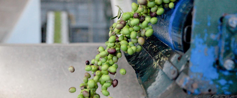 Your new harvest favorites await!