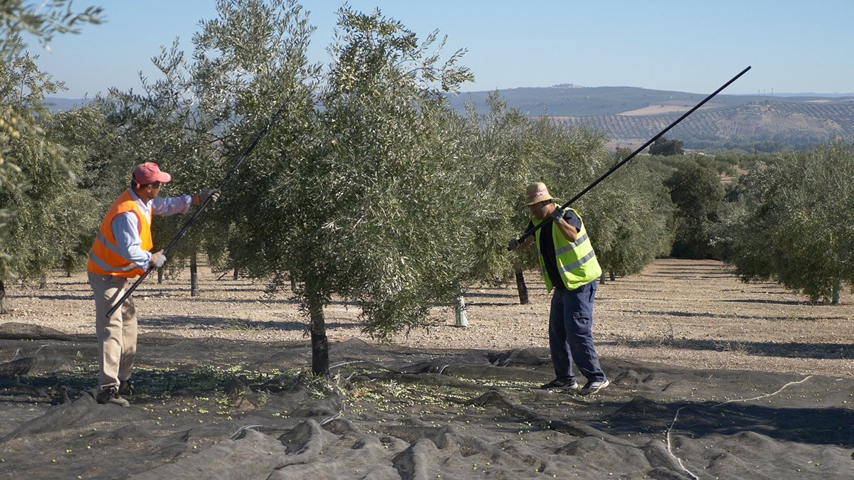 Harvest & The Trees
