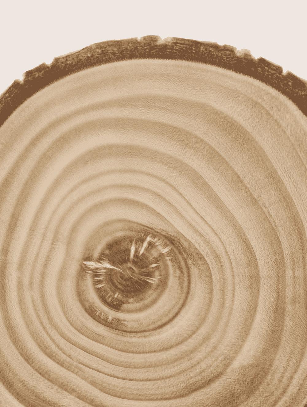 Aspen Bark Extract