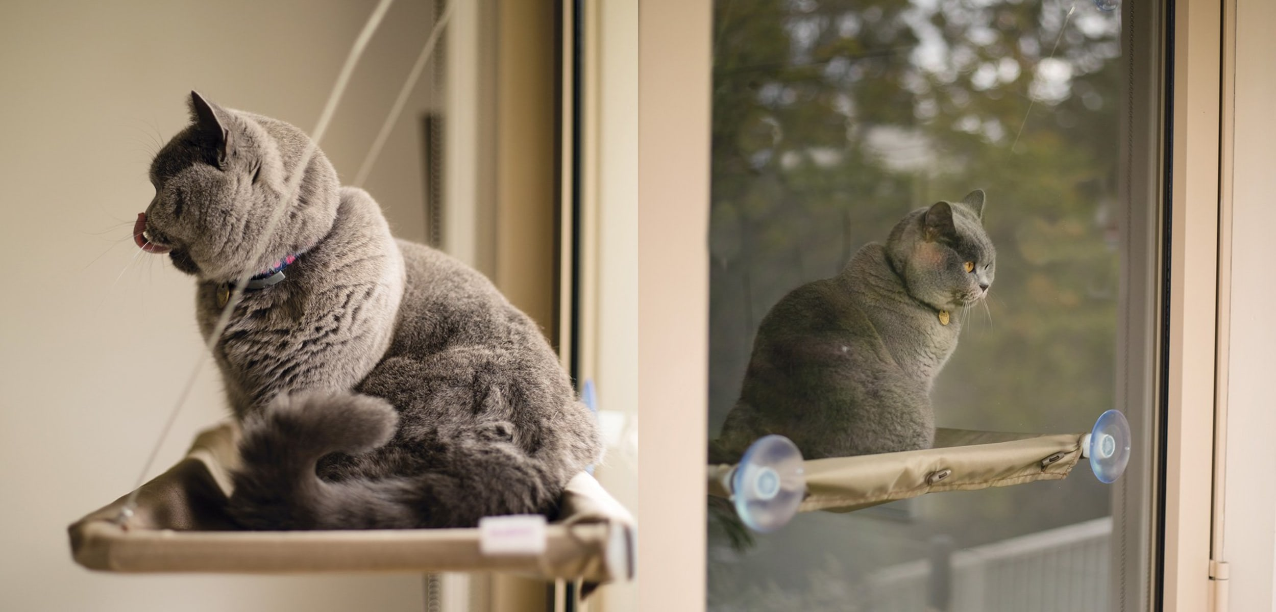 Kazoo The Lookout Window Cat Bed Desert Sand