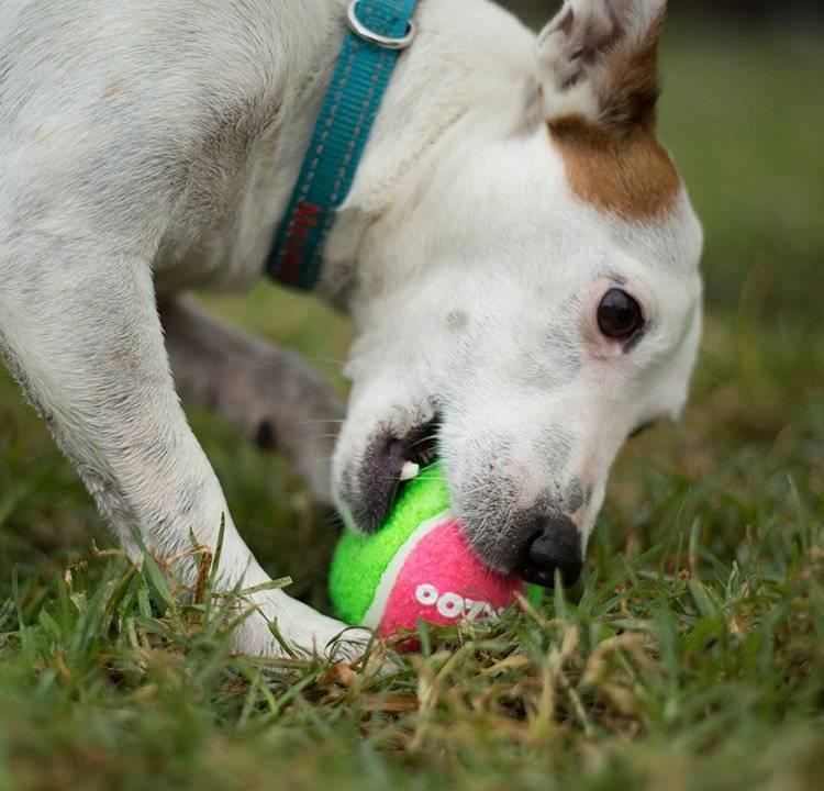 Kazoo Sponge Tennis Ball